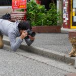 沖昌之【猫写真家】の経歴、作品、写真展を紹介!猫を撮るきっかけやエピソードは?