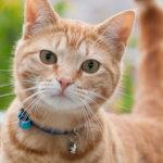 猫に鈴|ショートストーリー